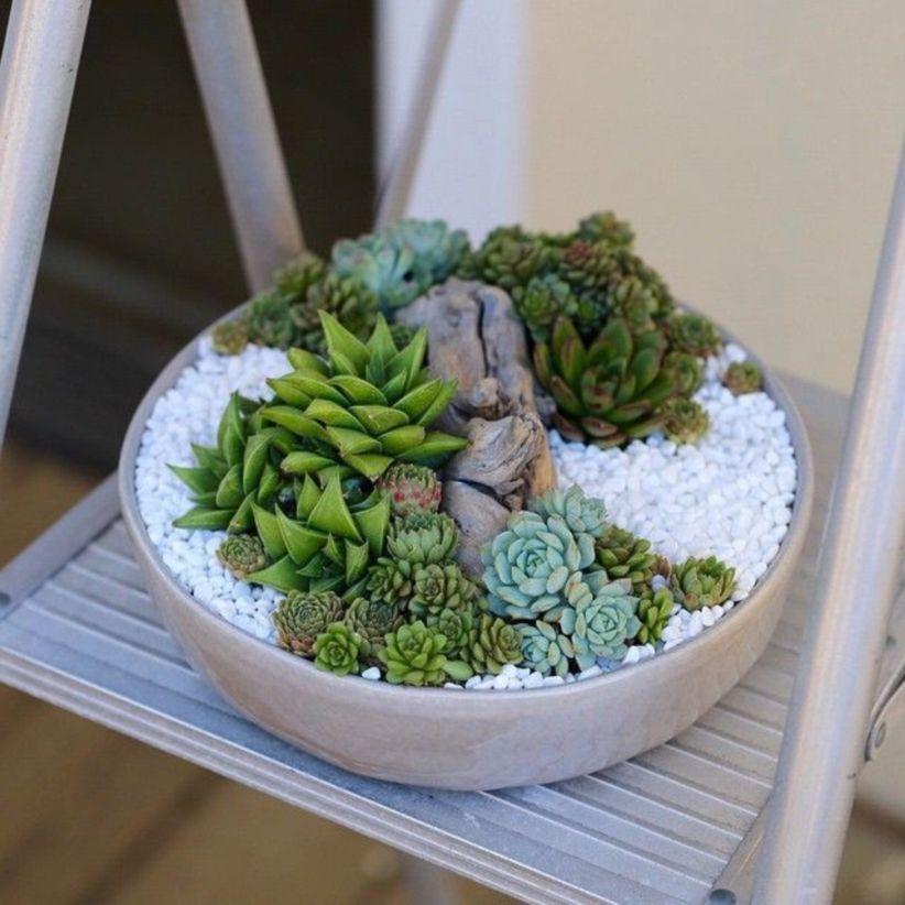 Succulent Garden Diy Indoor